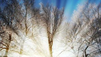 árboles congelados en invierno y luz del sol