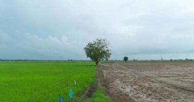 grünes Feld und Vorbodenfeld mit bewölktem Himmel