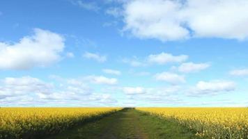 campo de canola y nubes