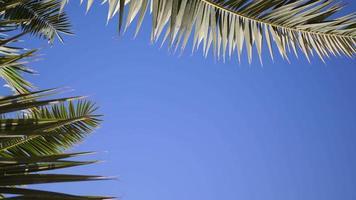 Green palm leaves flutter against a blue of sky