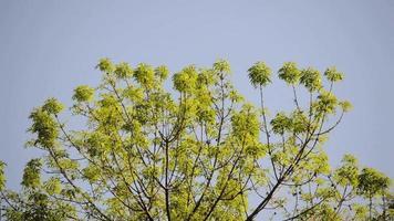 hojas de arbol