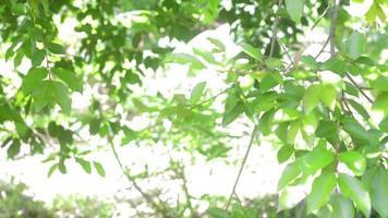folhas borradas video