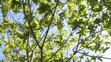 ramas de los árboles