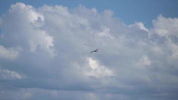 gaivota voando 4k video