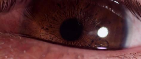 Close up of human eye with brown iris changing size of the pupil and blinking three times in 4K video