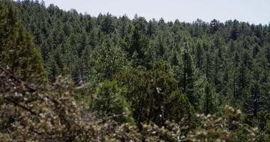 Toma panorámica relajante de una escena de bosque con árboles verdes y hermosos en 4k