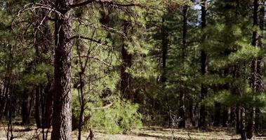 Toma panorámica horizontal del bosque de fantasía en un día soleado en 4k