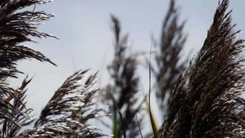 galhos de palmeira movendo-se lentamente em câmera lenta de 4k em dia de vento video