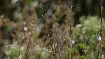 close up de pequenos espinhos e grama movidos pelo vento em 4k