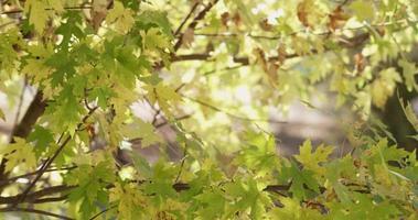 modelo de natureza com folhas amarelas e verdes e galhos de madeira em 4k