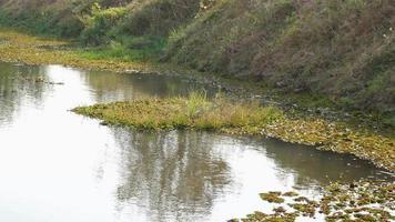 superfície da água do rio e vegetação