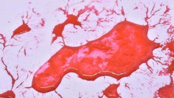 lapso de tiempo corazón rojo recuperación congelación de hielo derretido