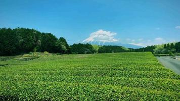 jardín de té verde, paisaje detrás del monte fuji. video
