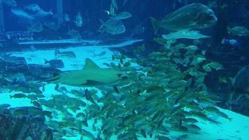 peixes, raias e tubarões nadando 4k