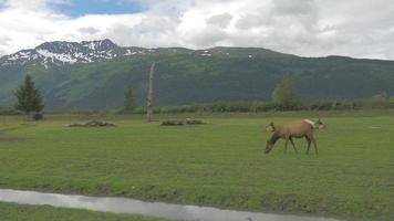 um pequeno grupo de alces está sentado perto de um riacho no Alaska 4k