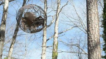 Rustic scene - wire globe hanging on a tree in the country