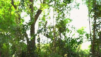 heureux jeune voyageur femme asiatique avec sac à dos marchant dans la forêt. randonneur femme asiatique avec sac à dos marchant sur le chemin dans la forêt d'été. concept de personnes de voyage aventure backpacker.