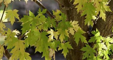 textura natural de folhas, galhos e tronco com fundo desfocado em 4k video