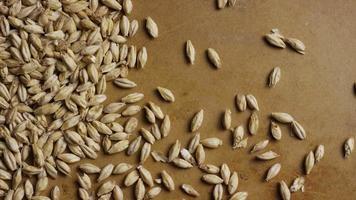 dose rotativa de cevada e outros ingredientes de fabricação de cerveja - fabricação de cerveja 133