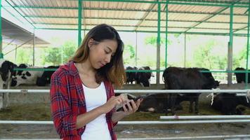linda mulher asiática ou agricultor usando telefone celular ou aplicativo de smartphone com vacas no estábulo na fazenda de gado leiteiro.