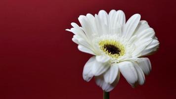 movimiento de parada de flor blanca