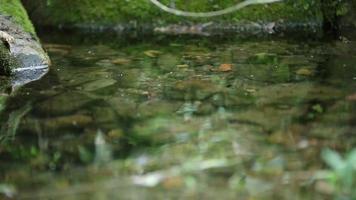 água do rio fluindo video