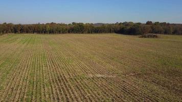 corte fresco de milho fazenda aérea baixa