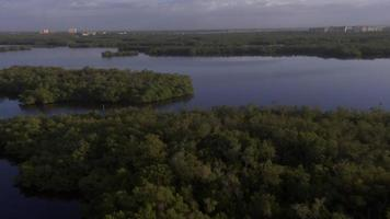 Flying over Florida Mangroves
