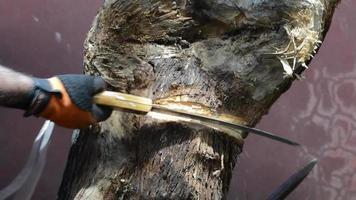 cortando toras serrote