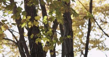 foto de baixo ângulo de folhas verdes e troncos no fundo da floresta em 4k