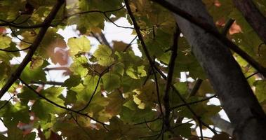 colpo basso angolo di foglie verdi e gialle nella foresta albero in 4K