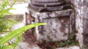 planta no cemitério com coluna no fundo video