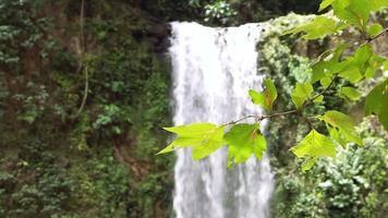cachoeira borrada e folhas em primeiro plano video