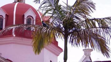 pássaro na palma da mão com a cúpula da igreja ao fundo