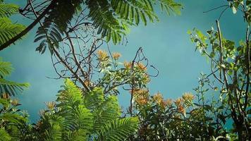 ramas de los árboles con fondo de cielo azul video