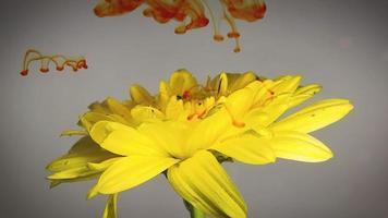fiore giallo e inchiostro arancione