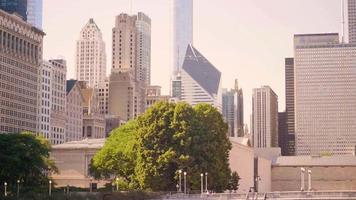 edifícios e arranha-céus de chicago com árvores em primeiro plano video