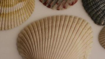 Rotating stock footage shot of sea shells - SEA SHELLS 010