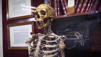 espécime médico de esqueleto humano