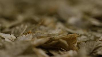 dose rotativa de cevada e outros ingredientes de fabricação de cerveja - fabricação de cerveja 309