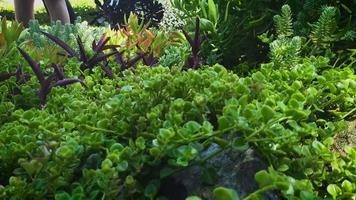 plantas suculentas no jardim botânico video