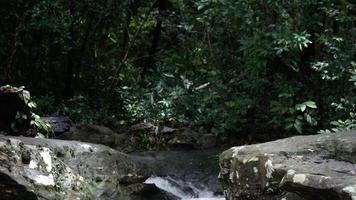 mujer sentada columpio pie sobre la roca en el bosque