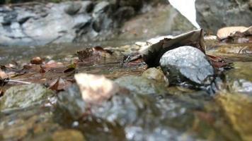 fluxo de água fluindo suavemente em meio à floresta