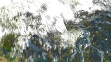 mejillón en el mar