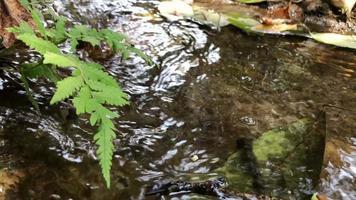 Corriente de agua en riachuelo. video