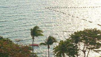 alberi di cocco intorno al mare