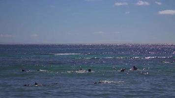 buceadores nadando en hawaii 4k video