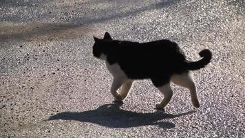 gato video