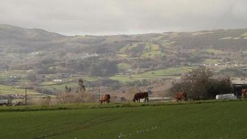 petit village paysage vidéo de stock