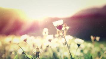 flor de verão 4k fundo vivo